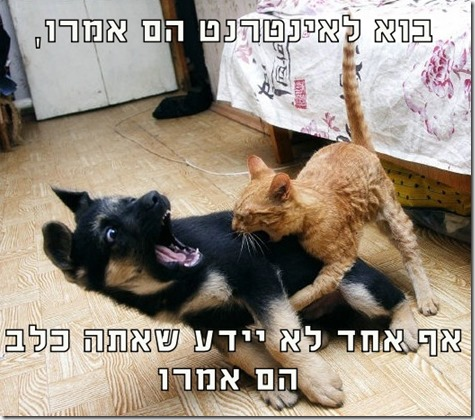 cat attack dog